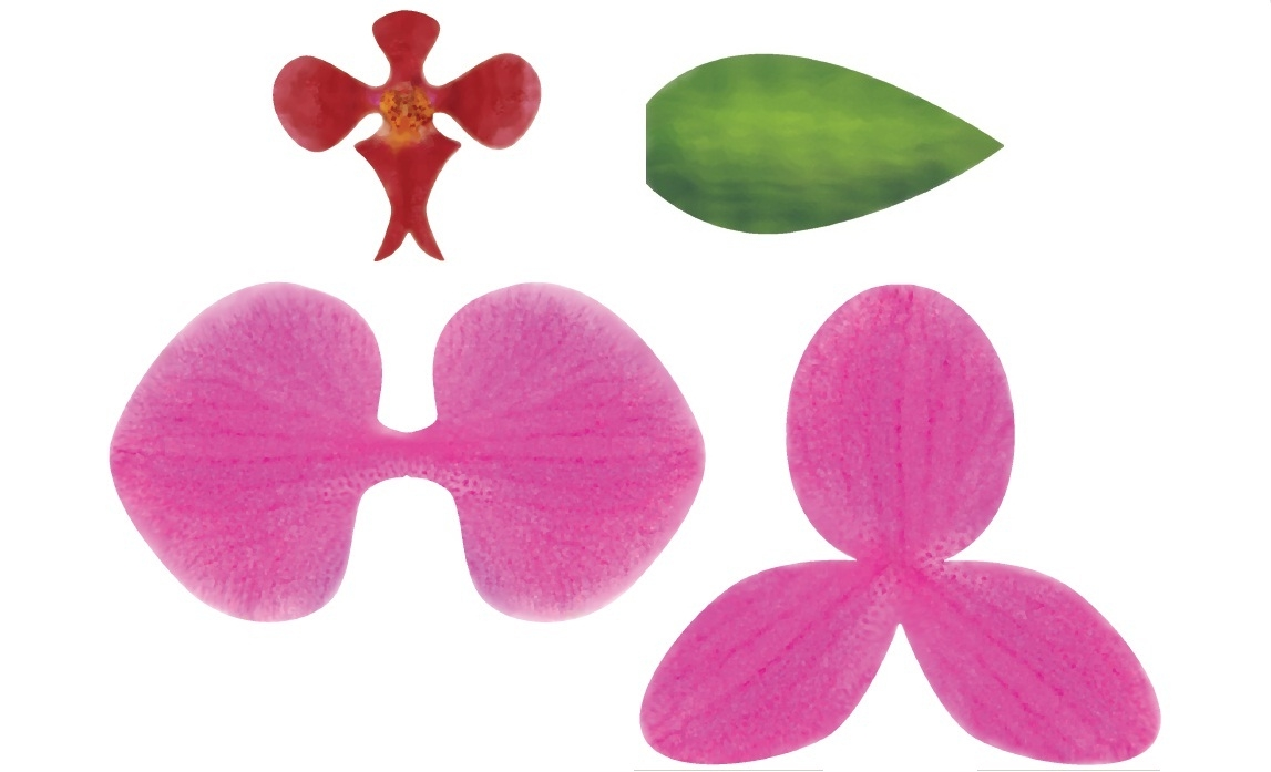 Hoa lan Hồ Điệp bằng giấy giống y như thật