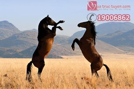 Lời chúc xuân hay nhất cho năm ngựa