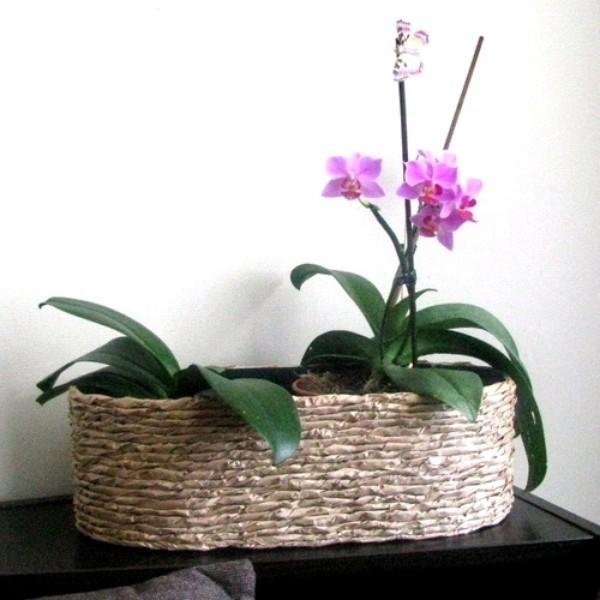 Cách cắm hoa lan mộc mạc trang trí nhà mình 14
