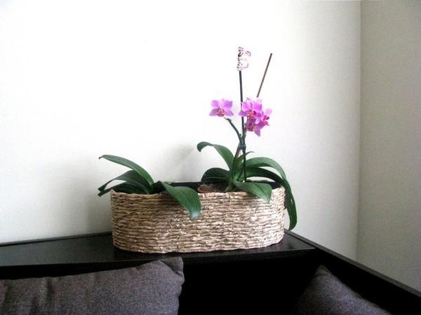 Cách cắm hoa lan mộc mạc trang trí nhà mình 13