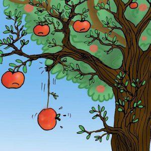 Câu chuyện tuần 51: 3 người cùng kinh doanh 1 loại táo